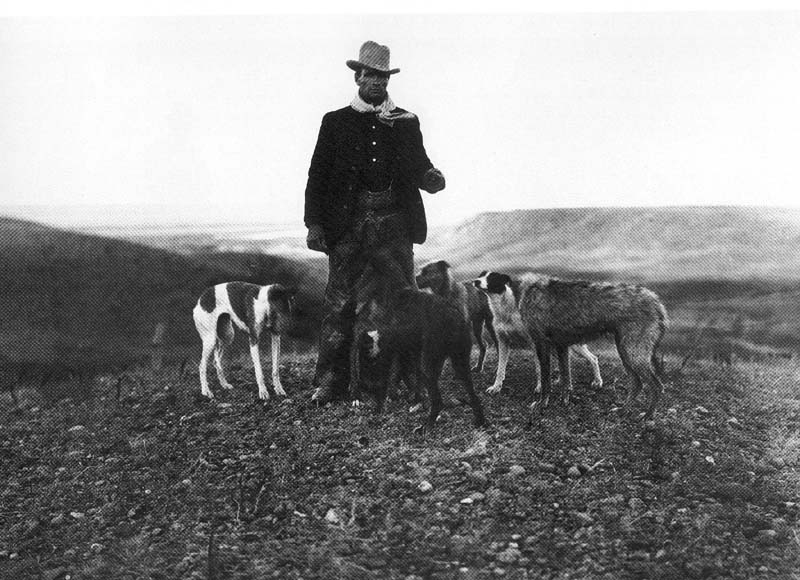 Staghounds And Greyhounds From Valeska Borzoi